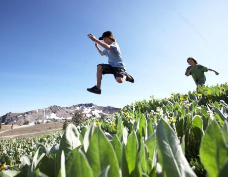 Young boys leaping through a field in the summertime