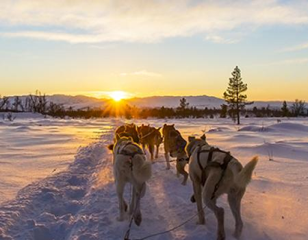 Lake Tahoe Dog Sledding