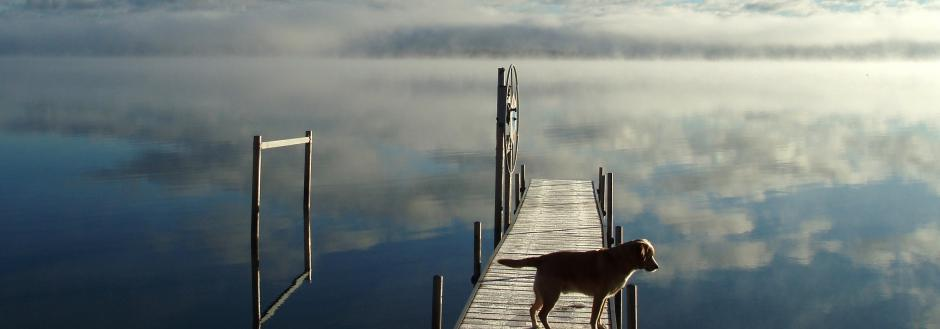 Dog on dock.