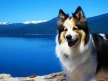 Dog at Lake Tahoe on hike.