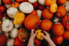 Assorted pumpkins of all sizes and colors