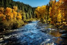 Truckee river lined with beautiful fall colors